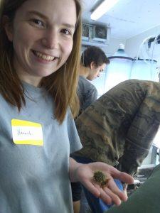 4-H Aquaculture Intern studying green sea urchins