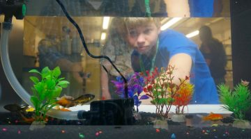 4-H'er looking through Aquaponics tank