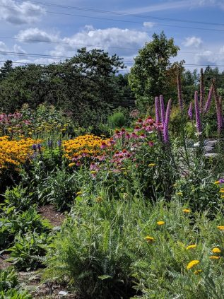Biodiversity Gardens At Extension Office