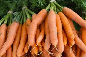carrots; photo by Edwin Remsberg, USDA