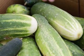 cucumbers; photo by Edwin Remsberg, USDA