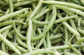 green beans; photo by Edwin Remsberg, USDA