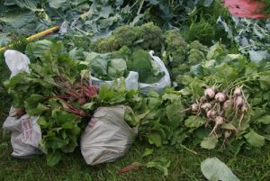 bags of fresh produce