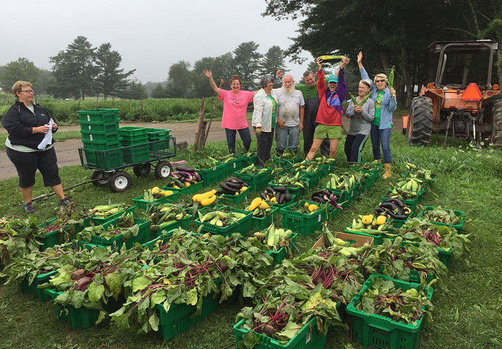 Master Gardener Volunteers with fresh produce gleaned from at Spiller Farm in Wells, Maine.