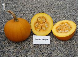 "pumpkin cultivar ""Small Sugar"""