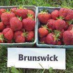 Brunswick strawberries