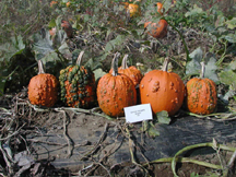 goose bumps pumpkin