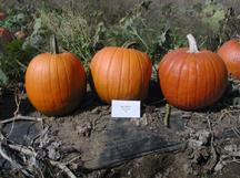 magic lantern pumpkin