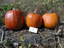 warlock pumpkin