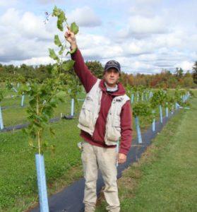 producer in vineyard
