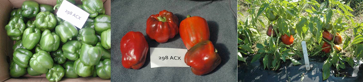 Peppers: 298ACX