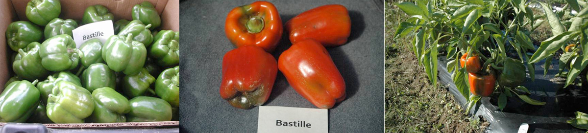 Peppers: Bastille