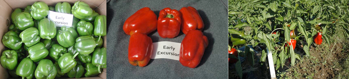 Peppers: Early Excursion