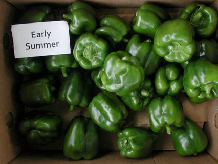 Peppers: Early Summer