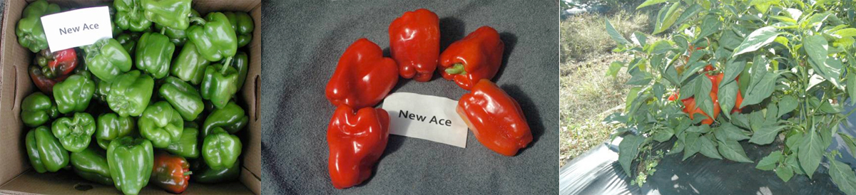 Peppers: New Ace
