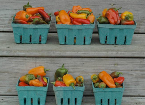 Peppers in quart and pint boxes
