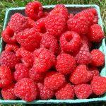 Killarney raspberries