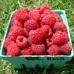 Nova raspberries