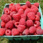 Taylor raspberries