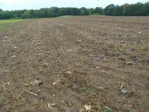 Corn Field Plowed Down