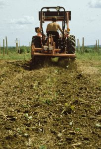 Tilling Sides of Strawberry Rows