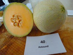 Melon: Astound variety