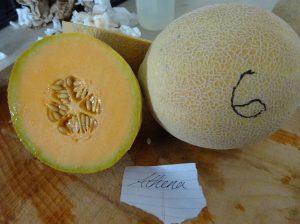 Melon: Athena variety