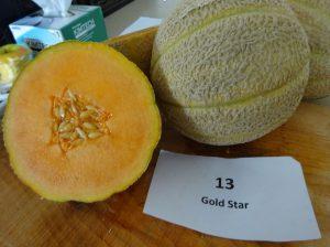 Melon: Gold Star variety