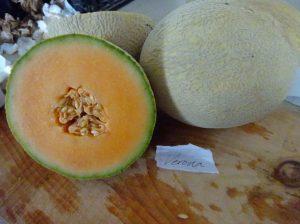 Melon: Verona variety
