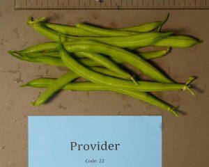 Snap beans: Provider variety
