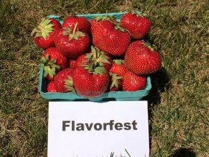Fresh strawberries: Flavorfest variety