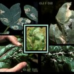 Leafminers - variety of images