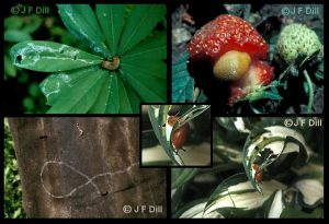 variety of slug images and the trails they leave behind