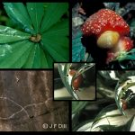 a variety of slug images and the trails they leave behind