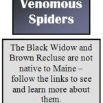 A note explaining that dangerous venomous spiders such as the Black Widow and Brown Recluse are not native to Maine