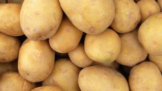 "Photo of potatoes for indicating our ""Vegetable Pests"" category in our photo gallery"
