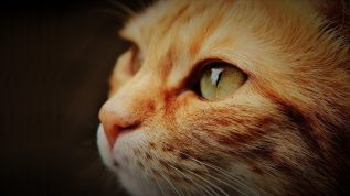 """Photo of a cat, for marking our """"Pets & Animals"""" section of our insect ID section"""