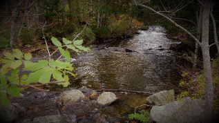 Photo of Tunk Stream in downeast Maine along Rt. 182, October 2010.