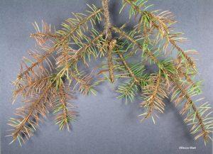 Foliage sample