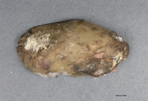 Rotting potato