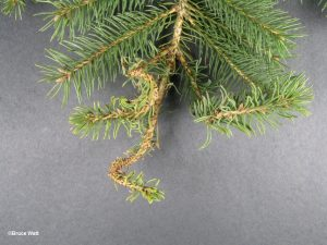 Affected branch