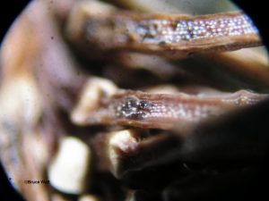 Base of infected needles