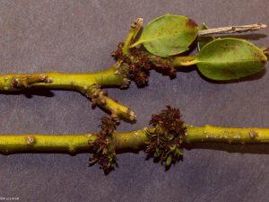 Injured stems