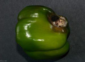 Affected fruit