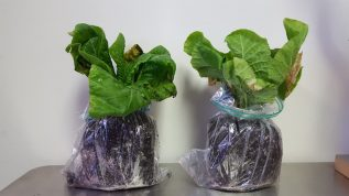 Example of plants to be submitted to our lab