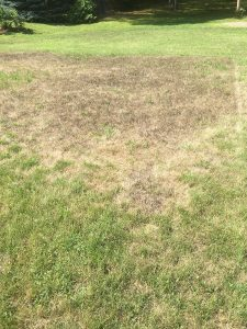 area of lawn affected by a fungus