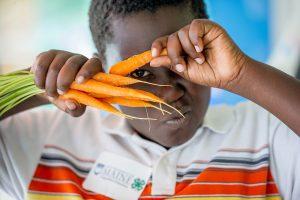 Remsberg Photo of boy peering through carrots