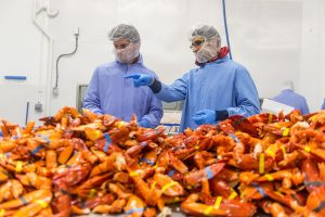 Remsberg two men obseving lobters