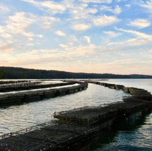 oyster farm at sunset