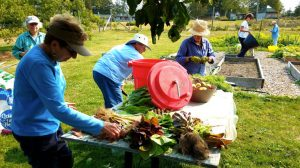 Master Gardener and Community Volunteers at Blueberry Cove Camp
